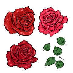 Hand drawn roses and leaves isolated on white background. Vector illustration in tattoo style.