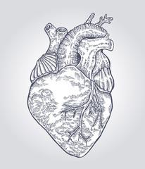 Hand drawn human heart. Vector illustration engraved