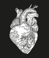 Hand drawn human heart on black background. Vector illustration engraved