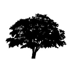 silhouette detached tree with leaves on a white background Vector illustration EPS10