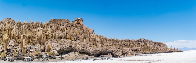 Incahuasi island, Uyuni Saline Salar de Uyuni, Aitiplano, Bolivia