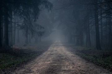 Foggy road in the dark, misty forest at late autumn. Background, illustration concept.