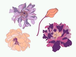 Botanical Peony Vector Element Pack