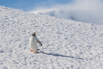 cute penguins living on the land of Antarctica