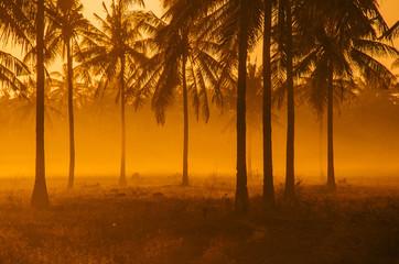 Palm tree field at dawn; vivid orange/golden nature background