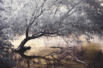 Infrared photo of lake with tree