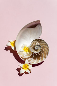 Tropical Shells and Coral with Flowers