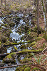 small stream with branches everywhere