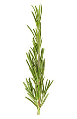 Rosemary isolated on a white background. Top view.