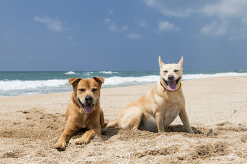 Dogs Lazing on the Beach