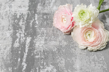 three pink ranunculus lying on table. Rustic background with copy space. Close up Persian buttercup flower.