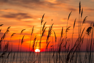 Chesapeake Bay Sunrise Wall mural