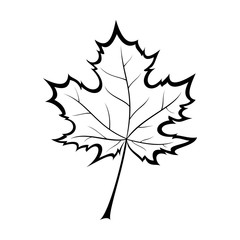 black and white vector illustration of a maple leaf