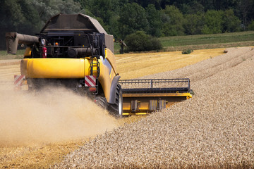 Combine harvester machine harvesting ripe wheat crops. Produce of wheat at farmland.