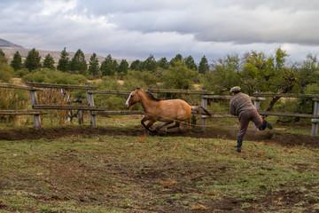 Horse taming in Patagonia