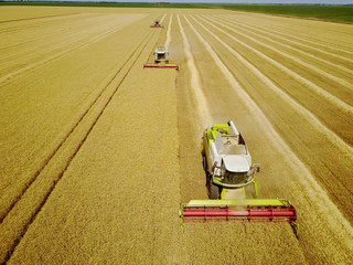 Aerial shot of yellow harvesters working on wheat field.