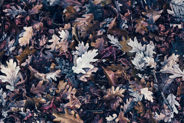 Rotting Withered Leaves