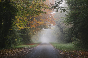 Country road and autumnal trees in fog. Norfolk, UK.