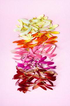 Gerbera petals gradient