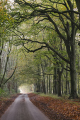 Country road in Autumn beside a row of Beech trees. Norfolk, UK.