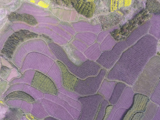 Aerial photography bird eye view of purple land farmland and nat