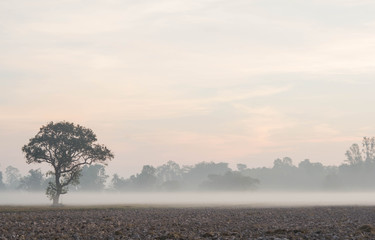 Morning fog and  a tree in farm