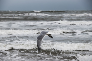 Seagulls flying by the Ocean