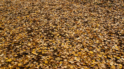 damp ground covered in yellow leaves