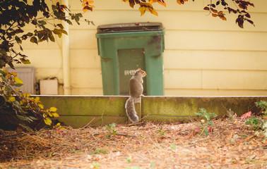 Squirrel Perched in Yard
