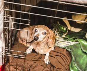 Old Mixed Dog in Cage