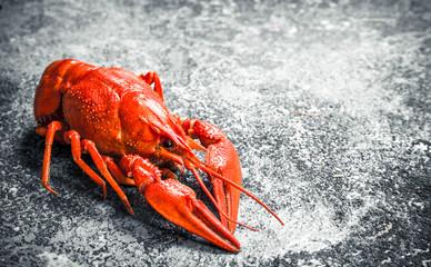 Welded river crayfish.