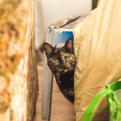 Brown Cat Peeking
