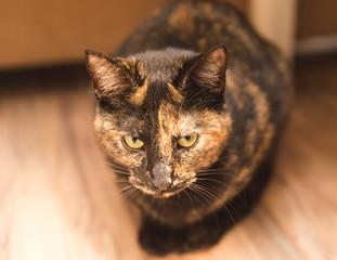 Brown Cat Sitting Indoors