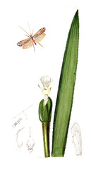 Illustration of insects and plants