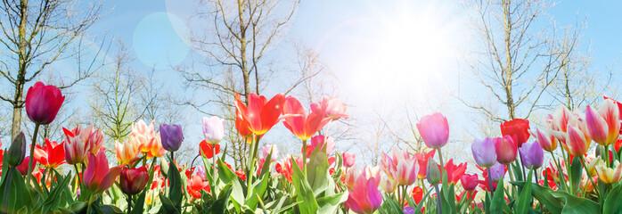 Wall Mural - Glück, Lebensfreude, Frühlingserwachen, Leben: Buntes, duftendes Blumenfeld im Frühling :)