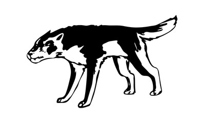Hand drawn aggressive wolf. Black vector forest predator image on white background. Sketch style animal.