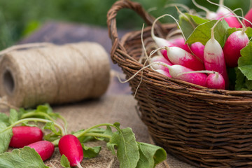 Bunch of fresh radishes in a wicker basket outdoors on the table. Bunch of fresh radishes in a wooden box outdoors on the table