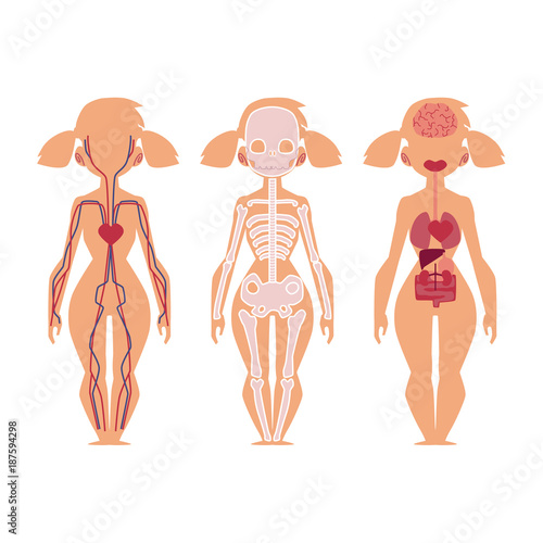 Vector Flat Structure Of The Human Body Anatomy Female Internal