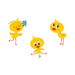 vector cartoon cute baby chicken characters set. Yellow small funny chicks playing with butterfly, flower and standing alone. Flat bird animal, isolated illustration on a white background.