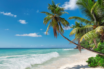 Wall Mural - Palm trees on exotic beach in tropical island.  Summer holiday and vacation concept background.