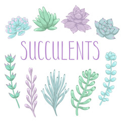 Set of hand drawn colorful succulents. Vector illustration.