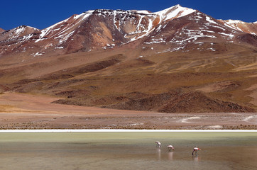 Bolivia - the most beautifull Andes in South America. The surreal landscape is nearly treeless, punctuated by gentle hills and volcanoes near Chilean border