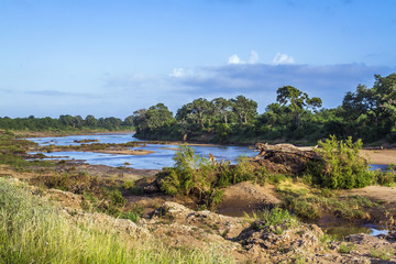 Riverside landscape in Kruger National park, South Africa