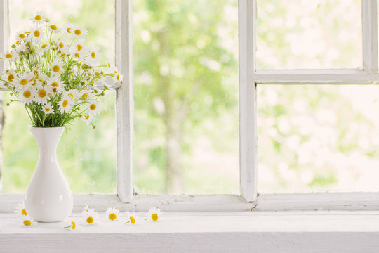 chamomile in vase on windowsill