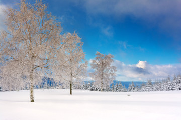 Wintertime - Black Forest. Winter landscape with tree covered by snow.