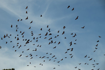 bats flying over the sky