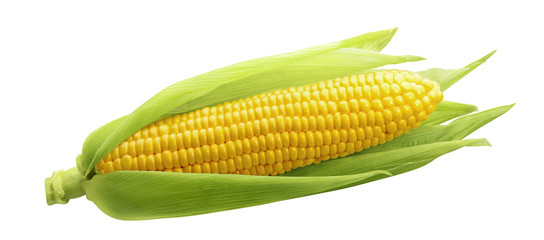 Photo sur cadre textile Graine, aromate Single ear of corn isolated on white background