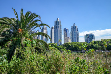Buenos Aires, view from Costanera Sur ecological reserve