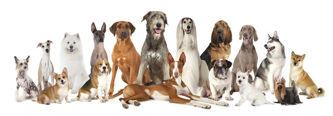 Group of various kind of purebred dogs