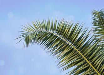 Palm leaf against blue sky with blurred bokeh Holy Week Easter concept Long weekend spring break